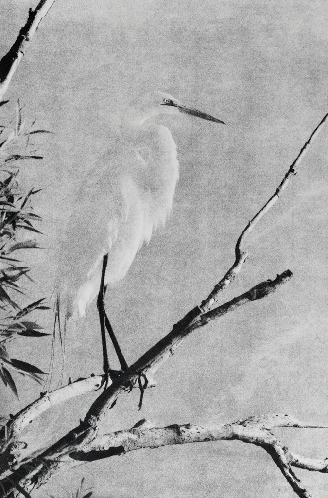 """Egret"" © Andy Kraushaar. Approx. 8x12"" (20.3x30.5cm) handcrafted alternative process photograph (gum bichromate) printed on Hahnemuhle Platinum Rag. GALLERY5X7 offers this signed, original print at $250."