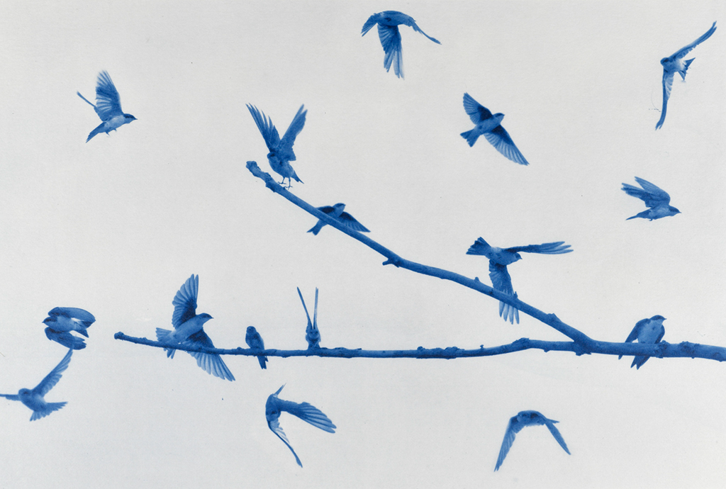 """Swallows"" © Andy Kraushaar. Approx. 8x12"" (20.3x30.5cm) handcrafted alternative process photograph (cyanotype) printed on Hahnemuhle Platinum Rag. GALLERY5X7 offers this signed, original print at $250."