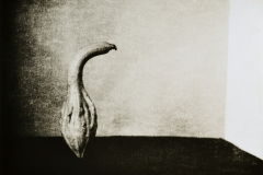"""Gourd 2"" © Barry Mayfield. Approx. 8X10.5"" (20X27cm) handcrafted alternative process photograph (silver gelatin lith print). GALLERY5X7 offers this signed, original print at $250."
