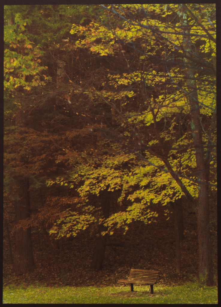 """""""Autumn, Saratoga Spa Park"""" © David Aimone. Offered by GALLERY5X7."""