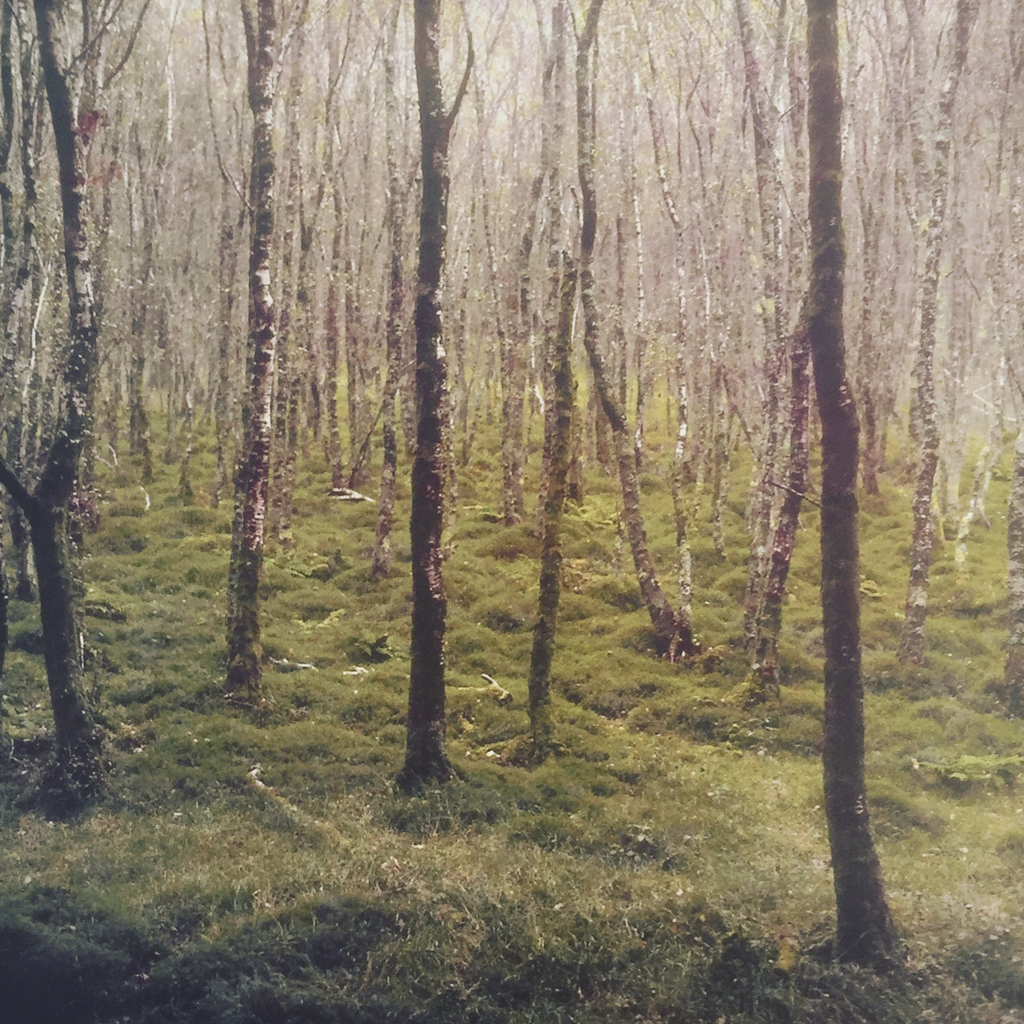 """""""Forest at Glendalough"""" © David Aimone. Offered by GALLERY5X7."""