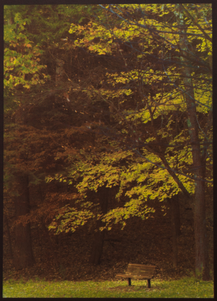 """Autumn, Saratoga Spa Park"" © David Aimone. Offered by GALLERY5X7."