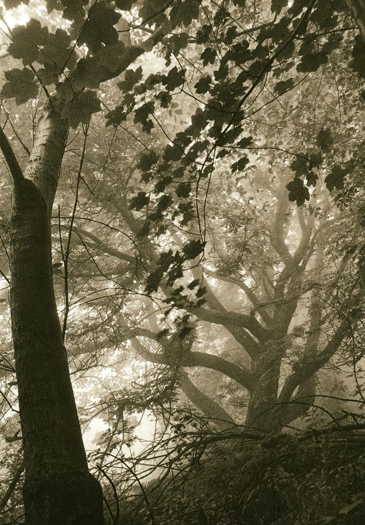 """After the Bend. Mist"" © Iván B. Pallí.  Offered by GALLERY5X7."