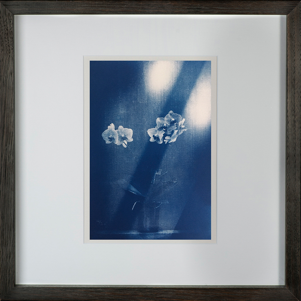 """""""Ester's Orchid 2"""" © Mat Hughes. Approx. 6.75x9.5"""" (17x24cm) handcrafted cyanotype still-life study behind screen from scanned large format 4x5 negative. Printed on watercolour paper and bonded on 16x16"""" (40.5x40.5cm) Forex foamboard ready for framing. Edition of 5 unique signed prints. Offered by GALLERY5X7 at $250."""