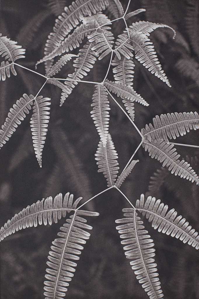"""""""Fern Study Island of Hawaii"""" © Tom Wise. Fern Study from Hawaii Tropical Bio-reserve and Garden, Island of Hawaii. Approx. 6x9"""" (15.2x22.9cm) handcrafted alternative process photograph (palladium and gold-toned kallitype). GALLERY5X7 offers this signed, original print at $250."""