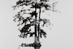 """Bald Cypress Reflections"" © WJ Eastman.   Offered by GALLERY5X7."