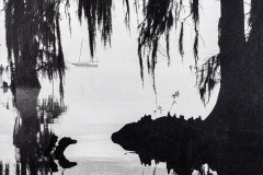 """Spanish Moss Mooring"" © WJ Eastman.   Offered by GALLERY5X7."
